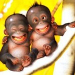 aap vrij stress